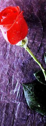 ROSE_rouge-2.jpg