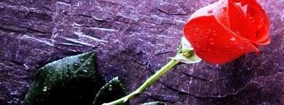 rose_taleb_abderrahmane.jpg
